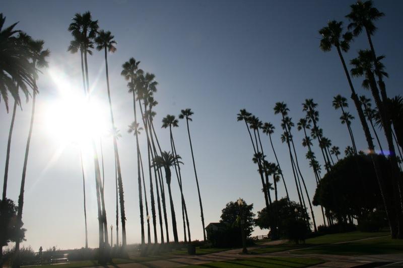 palme a L.A.