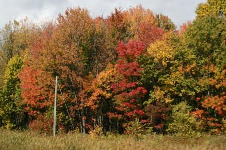 Le foreste canadesi